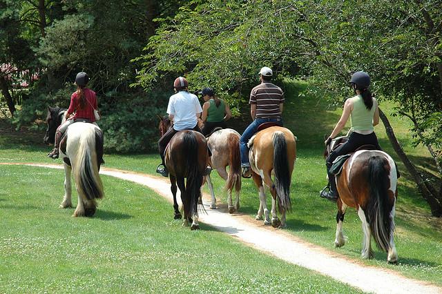 centre equestre o cheval